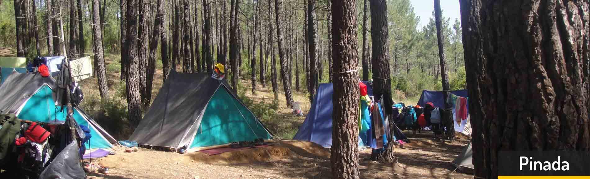 pinada-campamento-talayuelas